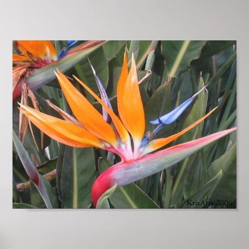 Flor de la ave del paraíso póster