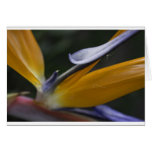 Flor de la ave del paraíso tarjeta