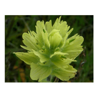 Flor de la brocha, isla de Unalaska Tarjeta Postal