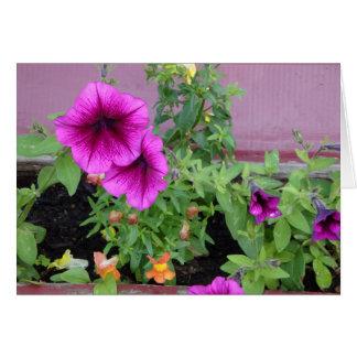 Flor de la caja de ventana tarjeta de felicitación