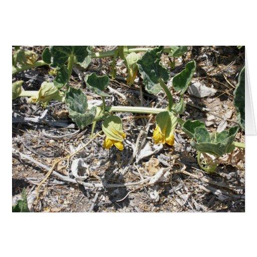 Flor de la calabaza en las primaveras de la cala d tarjeta de felicitación