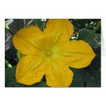 Flor de la calabaza felicitaciones