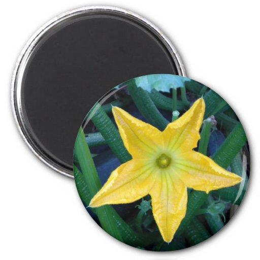Flor de la calabaza imán redondo 5 cm
