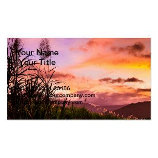 Flor de la caña de azúcar en la puesta del sol plantillas de tarjeta de negocio