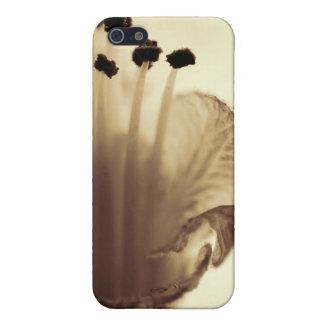 Flor de la castaña iPhone 5 coberturas