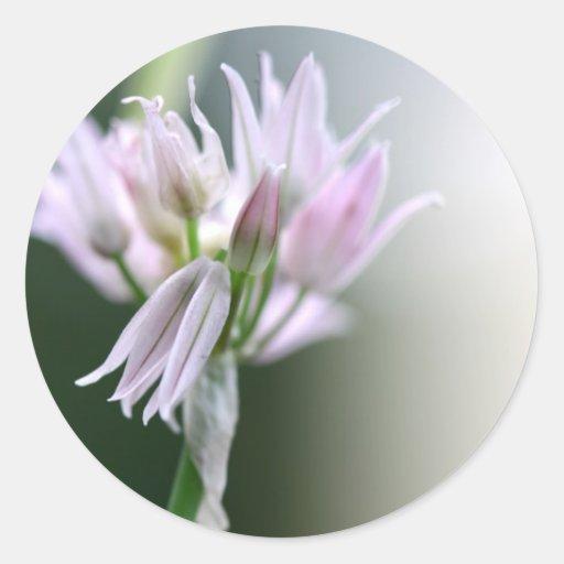 Flor de la cebolleta pegatinas redondas
