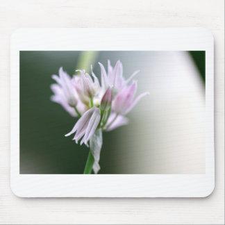 Flor de la cebolleta alfombrillas de ratones
