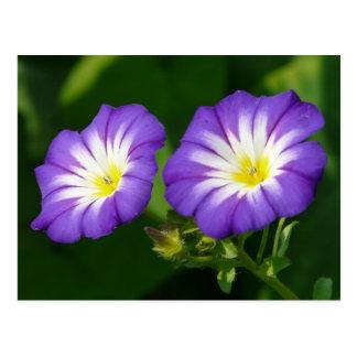 Flor de la correhuela postal