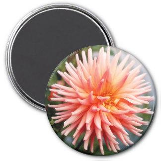 Flor de la dalia del deslumbramiento iman de nevera