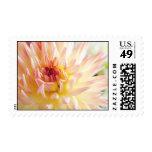 Flor de la dalia sello postal