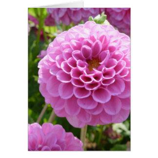 Flor de la dalia tarjetón