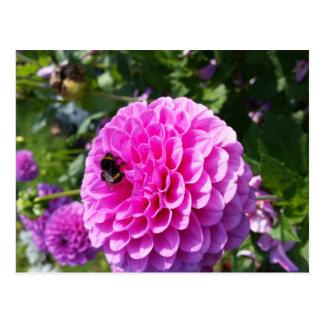 Flor de la dalia postales