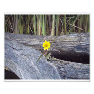 Flor de la entrepierna arte con fotos