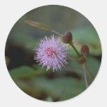 Flor de la fibra pegatinas redondas