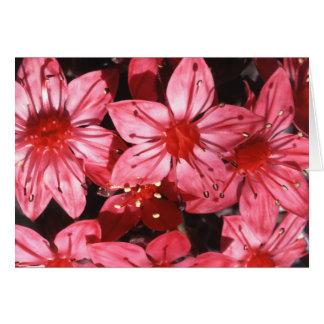 Flor de la flor de la chihuahua y tarjeta de los h