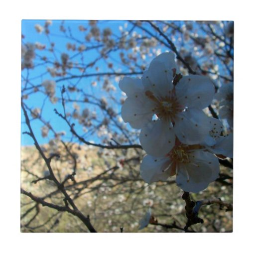 Flor de la flor en Arizona Azulejo Cuadrado Pequeño