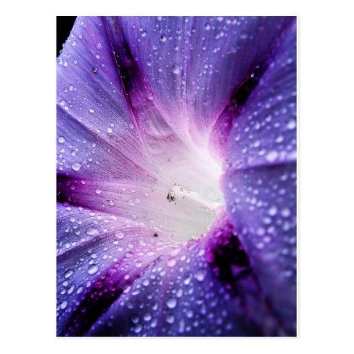 Flor de la floración postal