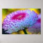 Flor de la floración poster