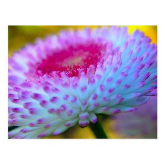 Flor de la floración tarjeta postal