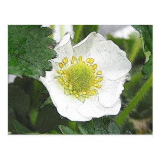 Flor de la fresa tarjeta postal