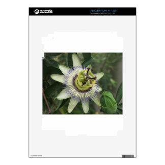 Flor de la fruta de la pasión calcomanías para el iPad 2