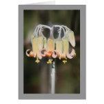 Flor de la lámpara tarjetas