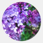 Flor de la lila pegatinas redondas