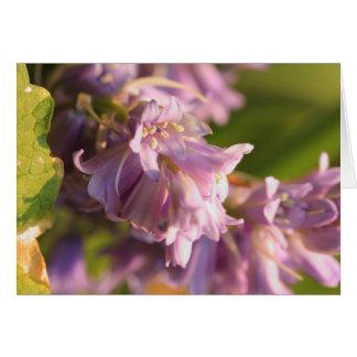 flor de la lila tarjeta pequeña