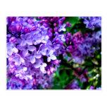 Flor de la lila tarjeta postal