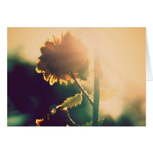 Flor de la llamarada de Sun Tarjeta
