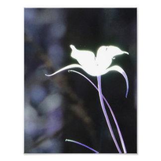 Flor de la luz del sol fotografías
