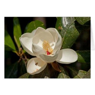 Flor de la magnolia meridional tarjeta pequeña