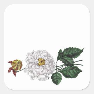 Flor de la magnolia calcomanías cuadradas personalizadas