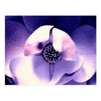 Flor de la magnolia tarjeta postal