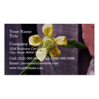 Flor de la mala hierba tarjetas de visita