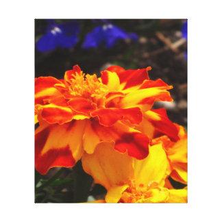 Flor de la maravilla del rojo anaranjado y del impresión en lienzo