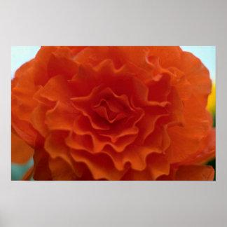 Flor de la maravilla impresiones
