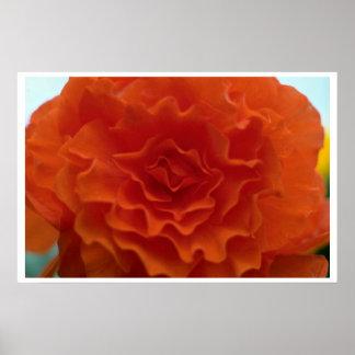 Flor de la maravilla poster