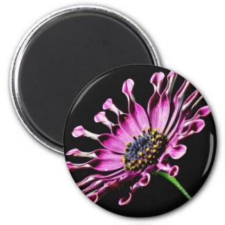 Flor de la margarita africana imán redondo 5 cm