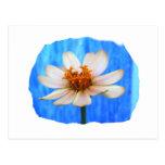 Flor de la margarita blanca contra fondo azul postal