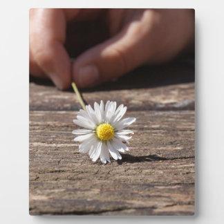 Flor de la margarita placas para mostrar