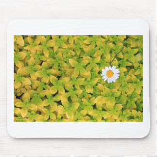 Flor de la margarita que alcanza para The Sun Tapetes De Raton