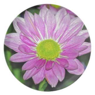 Flor de la margarita y su significado plato de cena