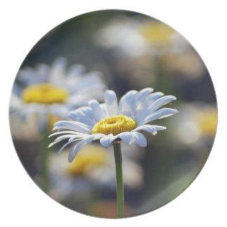 Flor de la margarita y su significado plato de comida