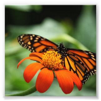 Flor de la mariposa y del naranja cojinete