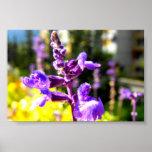 Flor de la montaña púrpura poster