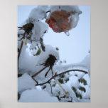 Flor de la nieve poster