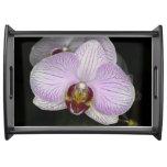 Flor de la orquídea bandejas