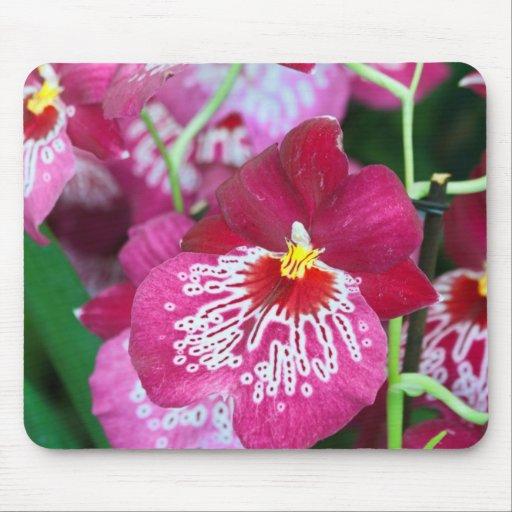 Flor de la orquídea del Miltonia Alfombrillas De Ratón