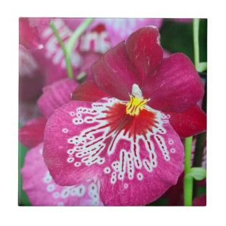 Flor de la orquídea del Miltonia Azulejo Cuadrado Pequeño